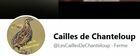 caillesdechanteloup_cailles.jpg